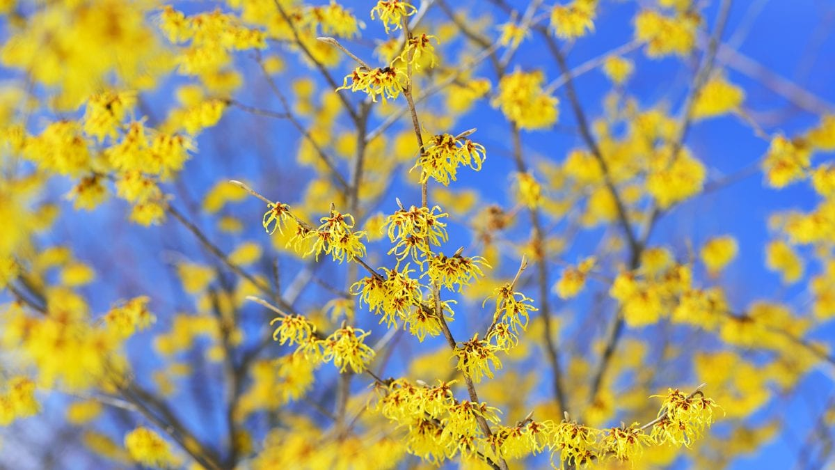 blooms on a tree