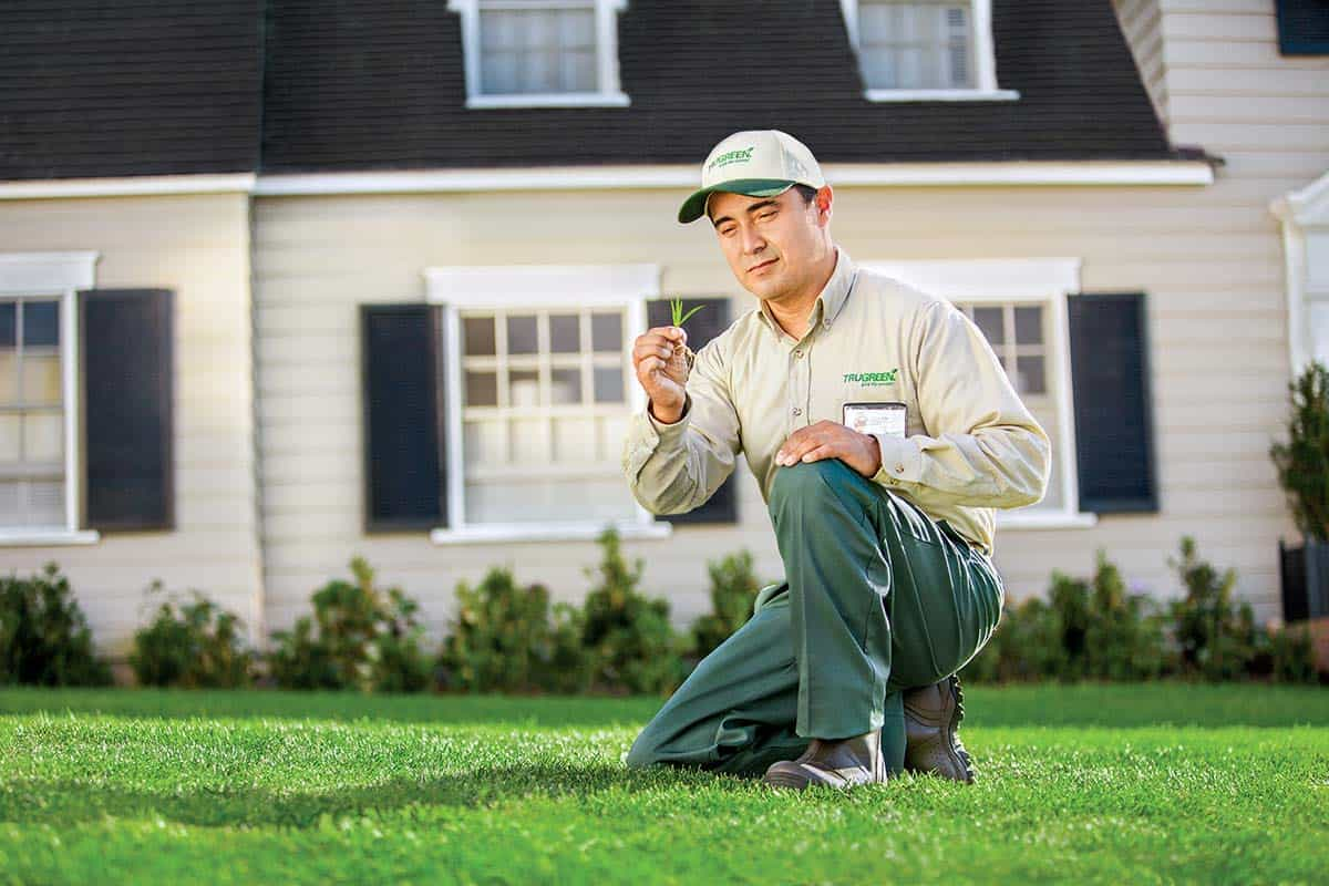 Lawn-inspection