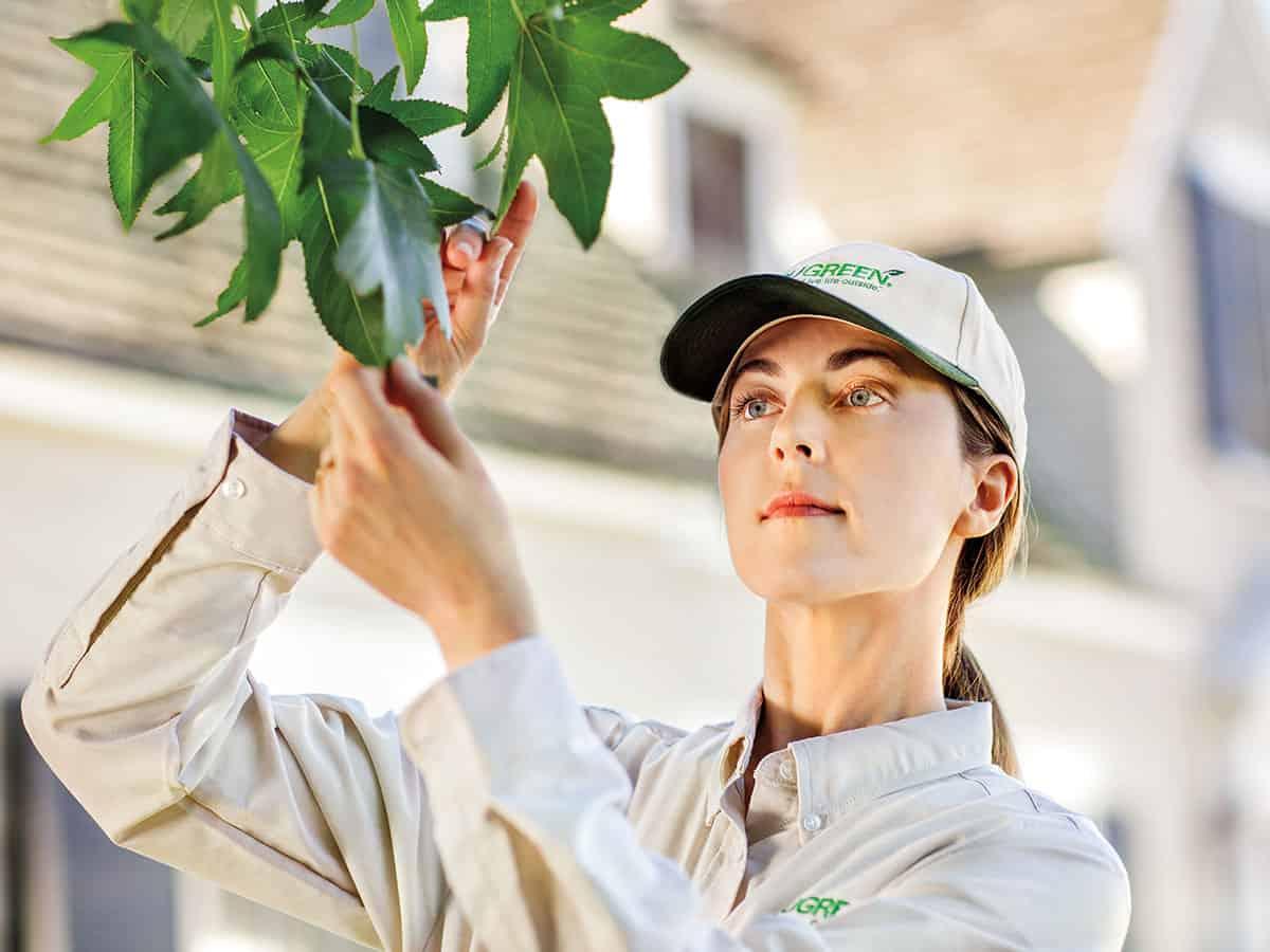 Leaf-inspection