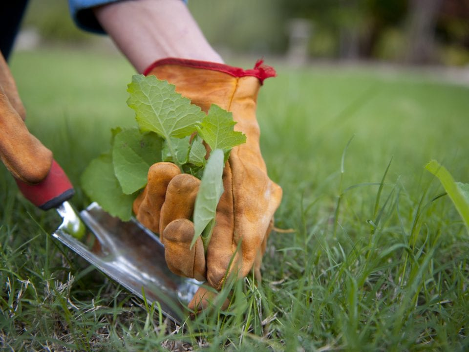 weeds being pulled by hand