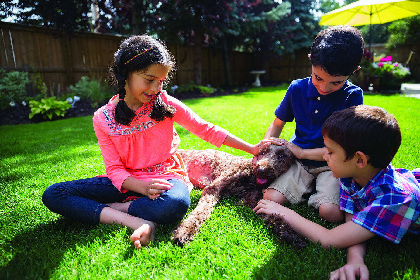 Brothers and sisters petting dog on sunny lawn