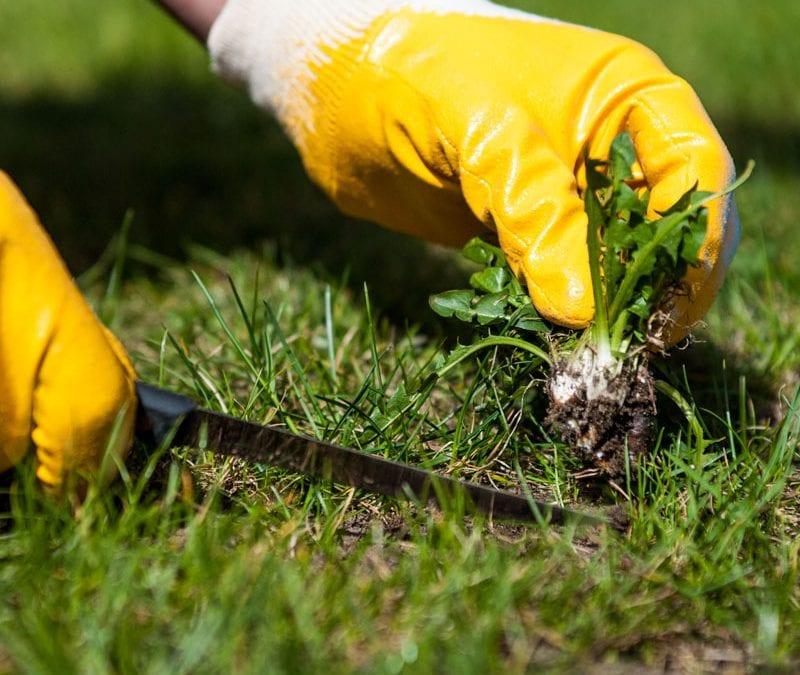 ways to eliminate weeds