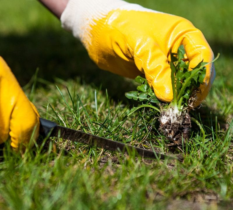 ways to eliminate weeds