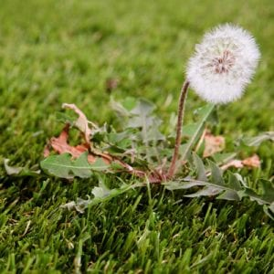 weed control for lawns