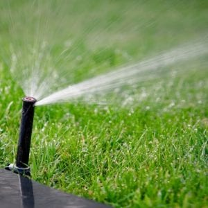 Proper watering to avoid brown patch on your Tupelo MS lawn