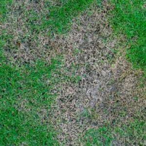 Avoid brown patch with proper methods and precautions in Baton Rouge LA