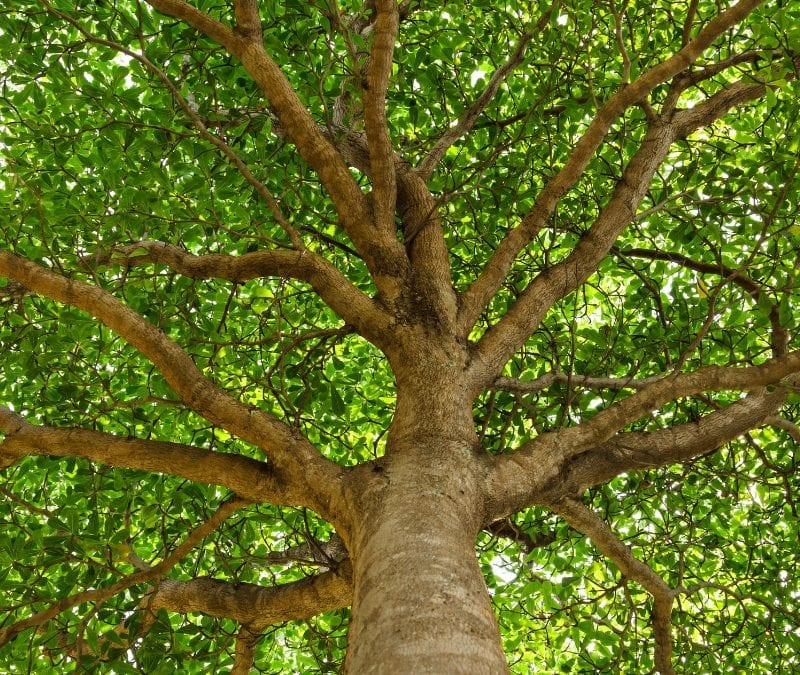 Protect you trees from disease with professional care in Prairieville, LA