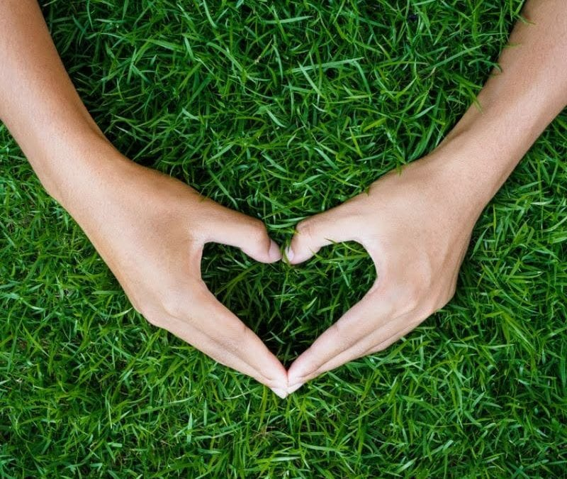 Give your Prairieville lawn the love it desreves with these summer lawn care tips.