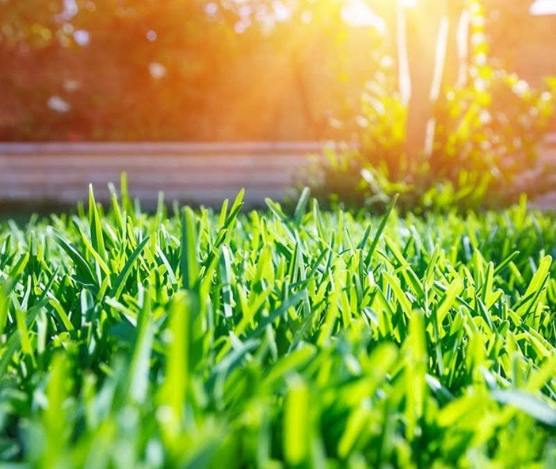 Lawn restoration will get your Baton Rouge, LA lawn looking healthy and beautiful again.