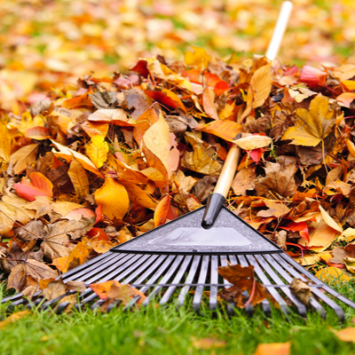 A fall pest control tip is to clean up the leaves in your Starkville, MS lawn.