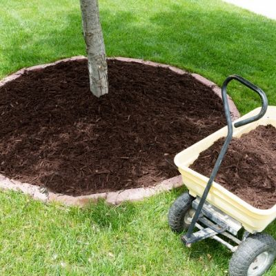 An easy tree care tip to make your Tupelo, MS tree healthier and more beautiful is by adding mulch.