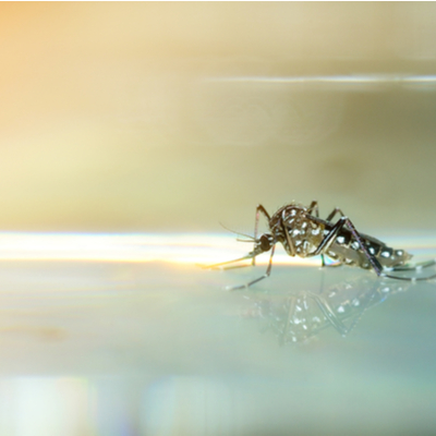 Fall mosquito control includes emptying out any standing water in your Tupelo, MS lawn.