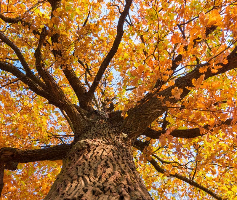 Follow these fall tree care tips to ensure your Prairieville, LA trees are getting the care they need all year long.