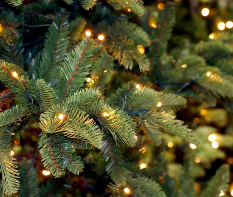 Disposing Of Christmas Trees: Recycle Your Christmas Tree: Top Tips For Christmas Tree