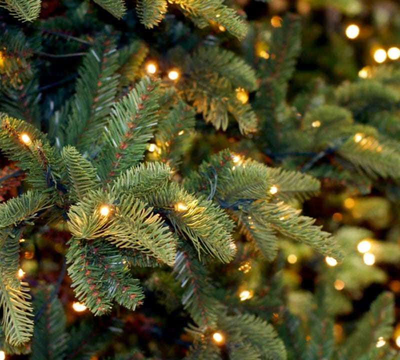Recycle your Christmas tree this year, here are a few great tips for how you can recycle your Christmas tree.