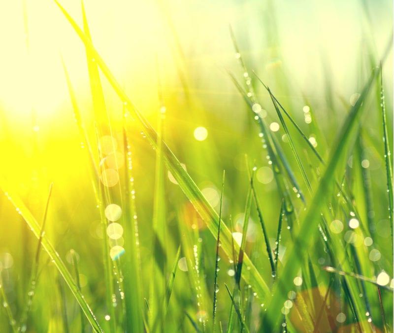Spring Lawn in the sun