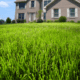 Healthy lawn in the front yard of a home