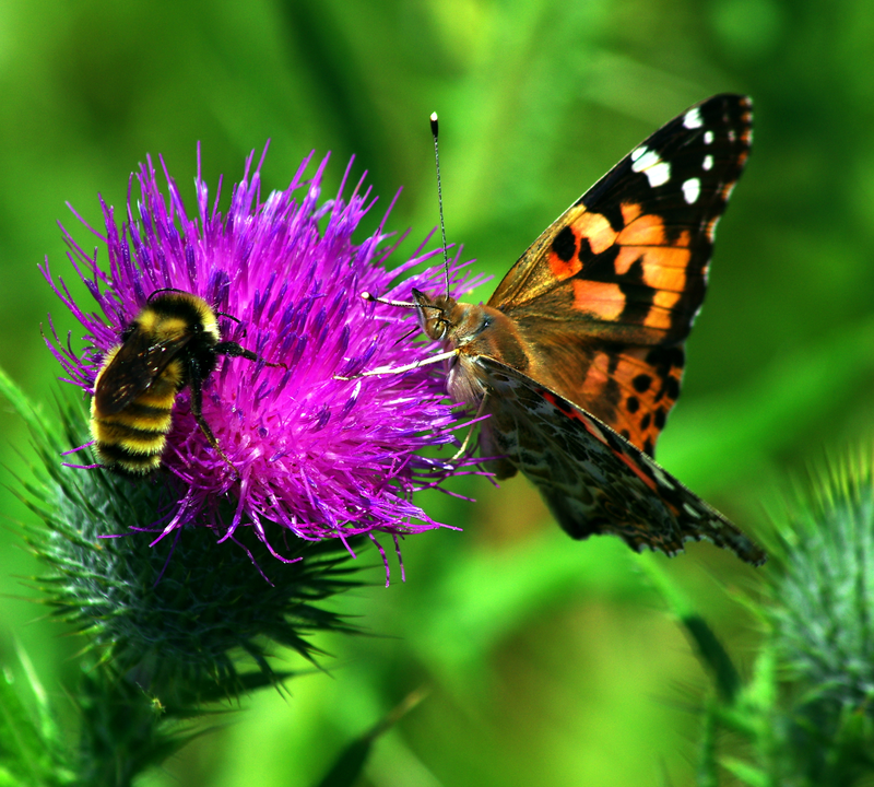 bee and butterfly on flower