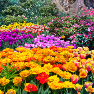 multiple types of flowers in a garden