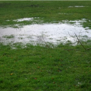 puddle of water on lawn