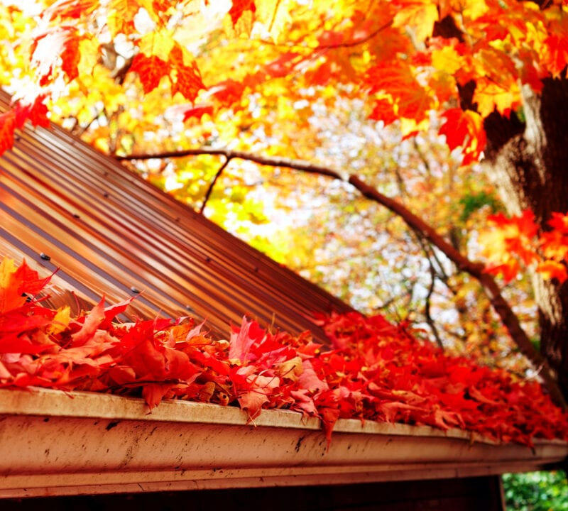 red leaves in a gutter