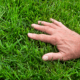 hand on healthy grass