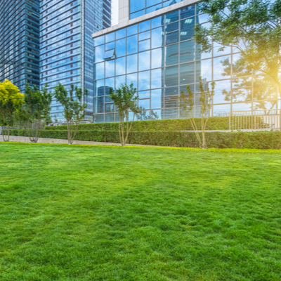 lawn in front of a commercial building