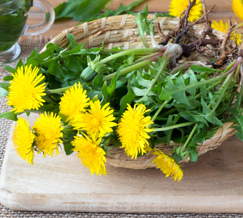 dandelions on a plate