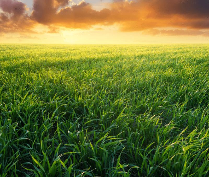 sunrise over grassy field