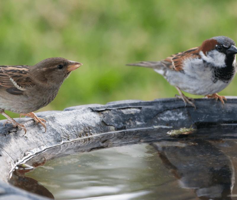 birds in a bird bath